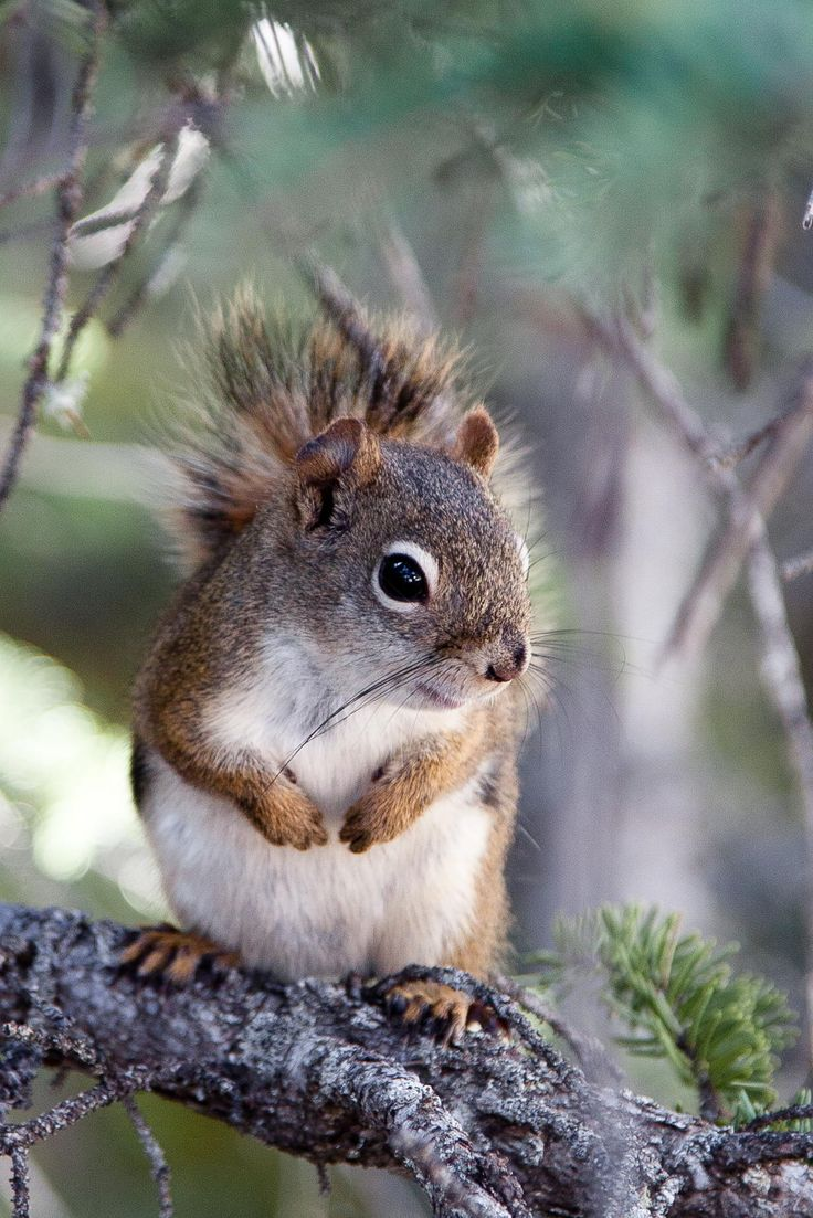 """Squirrel <3 / """"Where did I hide those nuts."""""""