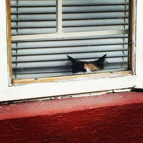 best adorable manx cat & kitten images ideas - most affectionate cat breeds