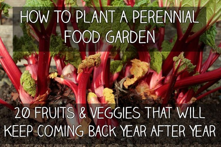 How to Plant a Perennial Food Garden – 20 Fruits & Veggies That Will Keep Coming Back Year After Year