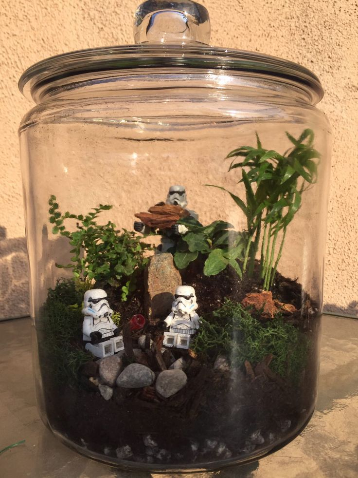 Star Wars Terrarium by @fitgeekdxb | GeekOut ! | Pinterest ...