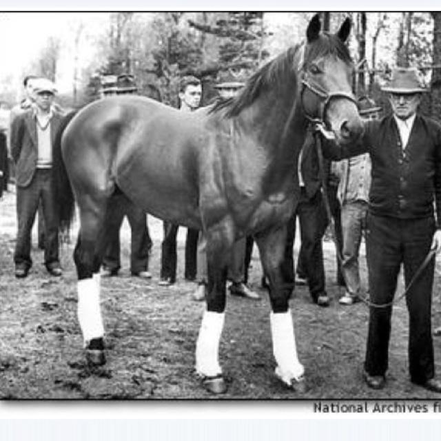 103 Best Images About Famous Race Horses On Pinterest