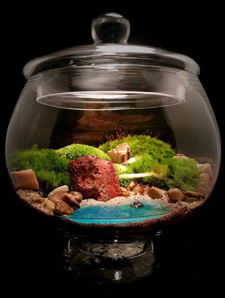 Excited to share the latest addition to my #etsy shop: Landscape Beach Terrarium, Glass Terrarium, Large Terrarium, Zen Decor, Beach Decor, Beach House Gift, Moss Terrarium, Terrarium Gift,