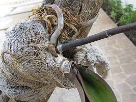 Orquídea Phalaenopsis plantada em um tronco