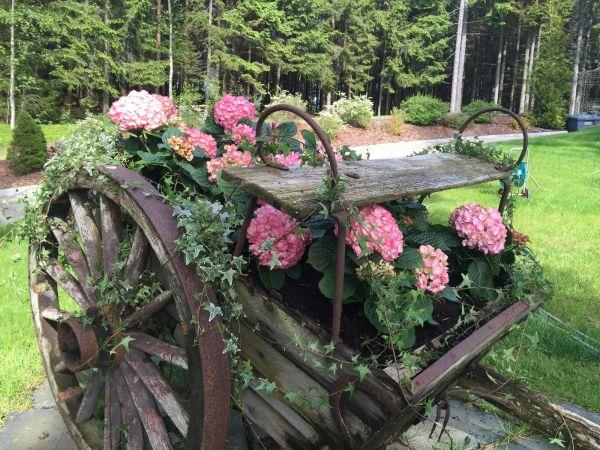 vogn med blomster - old wagon - hortensia