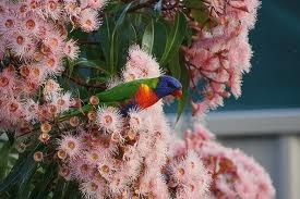 soft pink blossom with lorikeet accessory!