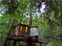 Treehouse camping experience in Santa Cruz Mountains near Monterey Bay, CA... on my bucket list!