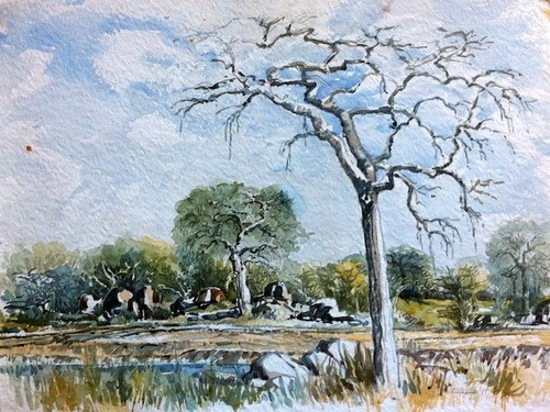 Kruger Park - I so loved my Dad's watercolours of the bushveld. - Wynand Smit Snr Artist / Architect