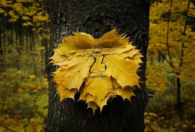 Tear off calendar by khlopkova, via Flickr