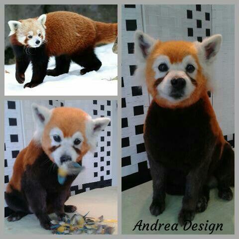 Red panda creative grooming
