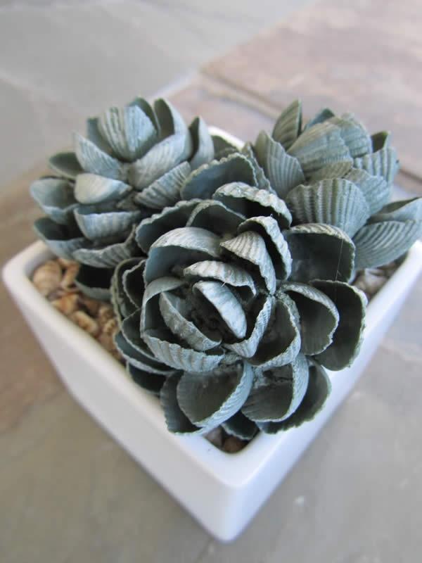Karen Robertson Collection - Triple Ark Shell Succulent