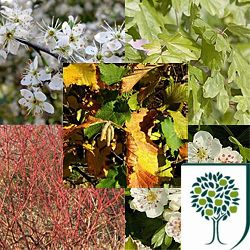 Pre-mixed pack of native hedging species, sure to provide a great home for wildlife in the future. Pack contains Hawthorn, Blackthorn, Hazel, Common Dogwood and Field Maple. Add some Dog Rose or Honeysuckle to ramble through!
