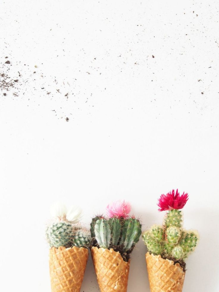 DIY Cacti Cones - STAY OUTSTANDING and show up for the next Party with these colourful Cacti Cones. Lav selv Kaktus Kræmmerhuse, den perfekte gaveidé.