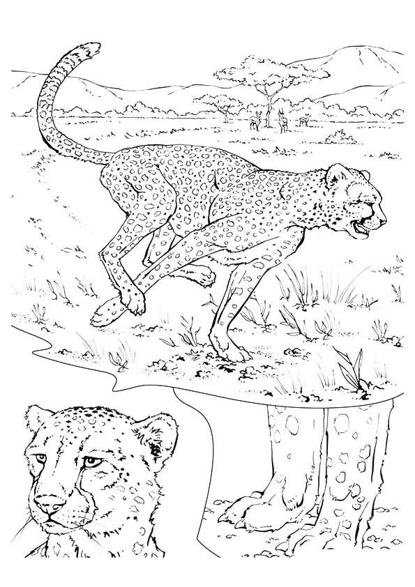 21 best Coloring images on Pinterest Coloring books, Coloring - best of coloring pages to print animals