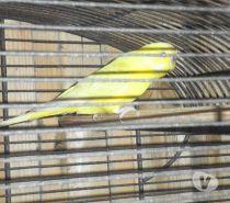 Photos Vivastreet perruche avec cage