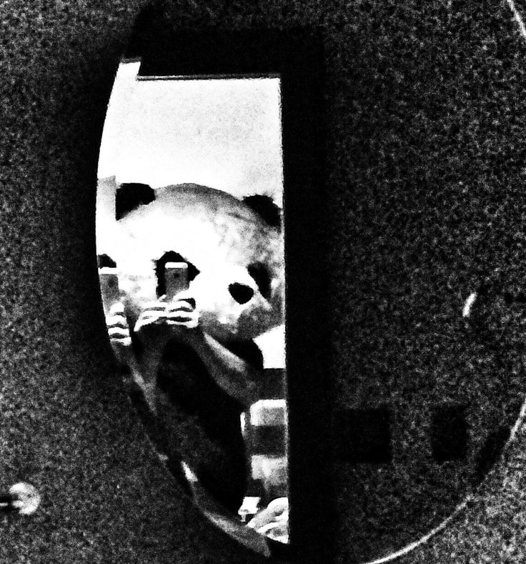 Panda in the bathroom