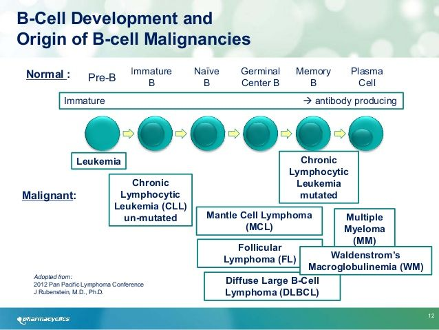 B Cell Activation Germinal Center Best 20+ Germin...