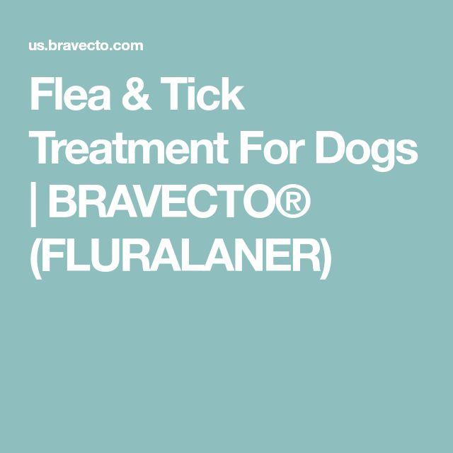 Flea & Tick Treatment For Dogs | BRAVECTO® (FLURALANER)