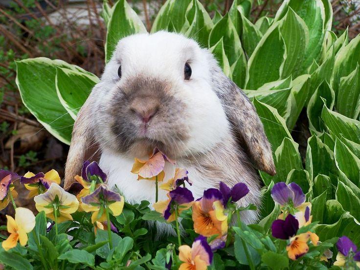 Las 25 mejores ideas sobre jaulas de conejos en pinterest for Cocinar un conejo