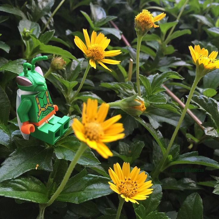 Twitch the warrior's lazy Thursday in Sunnyside Daycare garden  #toystory #toystory3 #twitch #sunnyside #toys #garden #yellowflowers #lego #legotoystory #legotwitch #legogram #afol #legofan #legophotography #legominifigure #legominifigures #pixar #legostagram #instalego #legolife #toyplanet #toycommunity #brickcentral #brickshift #brick #toyphotography #toyunion #minifigures #minicitizens by mini_citizens