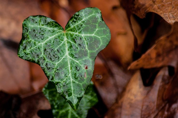 Green and lonely.  #nature #macro #leafs #green