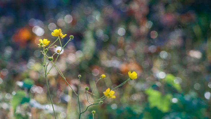 Last Colours of Summer - Kesän viimeiset värit by Pauliina Kuikka and Arto…
