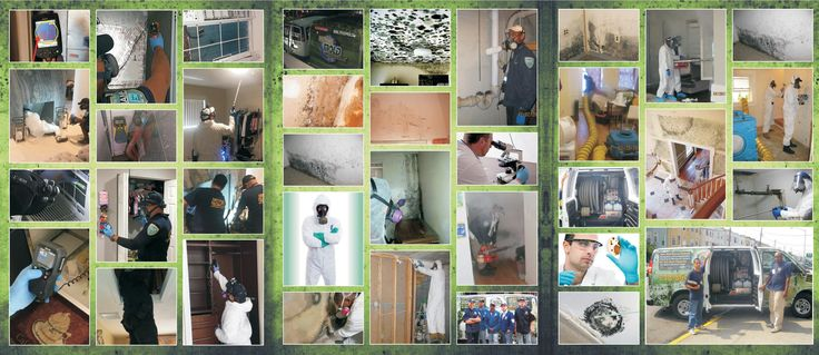 For testing and immediate removal gives us a call now!! When you have mold outbreak you need trained hazardous material removal pros and all of our crews are ready for urgent mold inspection together with the removal of black mold. Regardless of how small or large the problem we'll provide certified working team prepared to competently handle the cleaning.