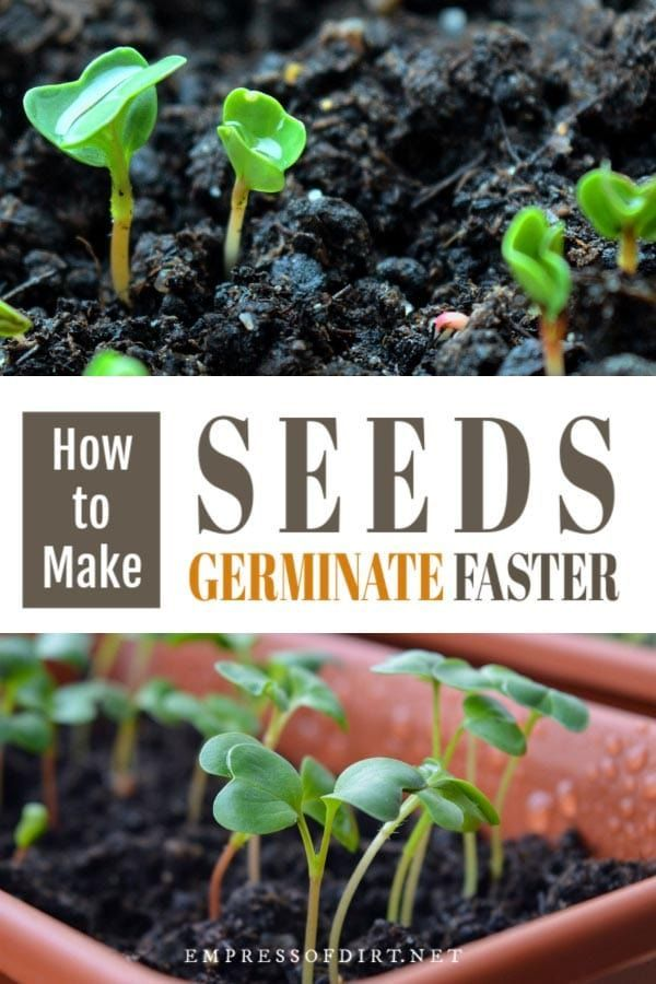 Tips For Speeding Up Seed Germination Home Vegetable Garden