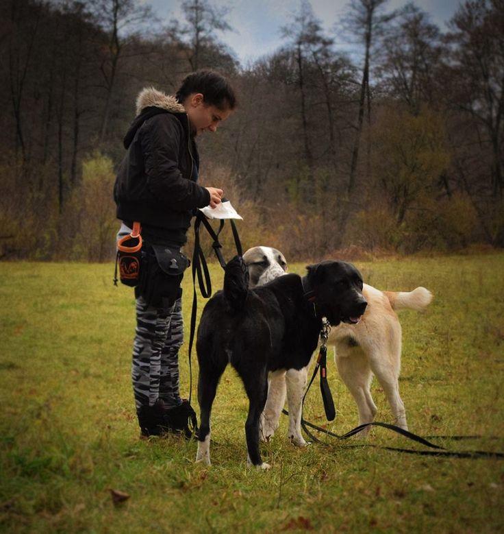 Kutyáimmal :) alabai