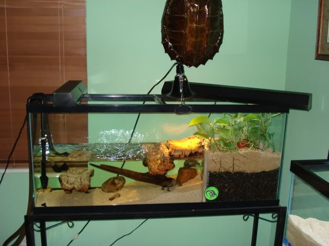 Show Me Your Tank Setup Sand Amp Silt Turtle Forum