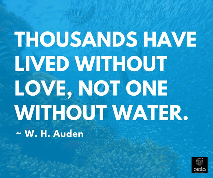 Water Love Quotes: 8 Best Ocean Quotes: Words That Inspire Marine