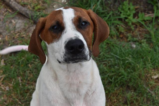 Adopt Maverick On Panama City Panama Pets
