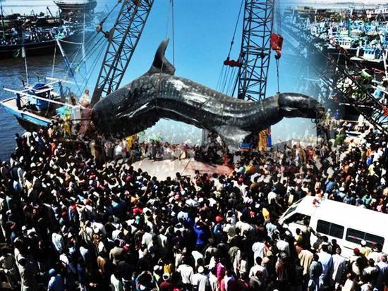 Largest shark ever caught | Cool pics | Pinterest | Sharks