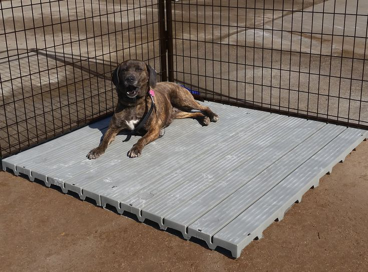 Dog Run Ground Material Google Search
