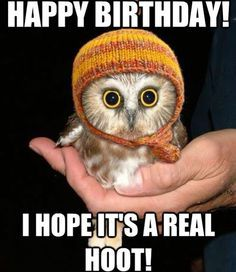 1918845871c0a220a24adf523a04230c baby owls baby animals 23 best birthday memes images on pinterest birthdays, happy