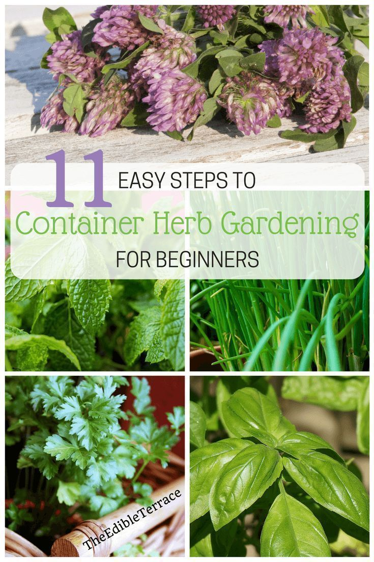 For those of you who love the idea of gardening but need something easy to start with, herbs are totally the way to go. You can grow them in small spaces, pots, raised beds, decks, etc. Beginners will be encouraged by how easy it is to grow many of these plants. Herb gardening is possible and I will give you several tips, ideas and plans on how to get started. #HerbGarden #easygardenforbeginners #gardenplanningideastips #herbgardenforbeginners