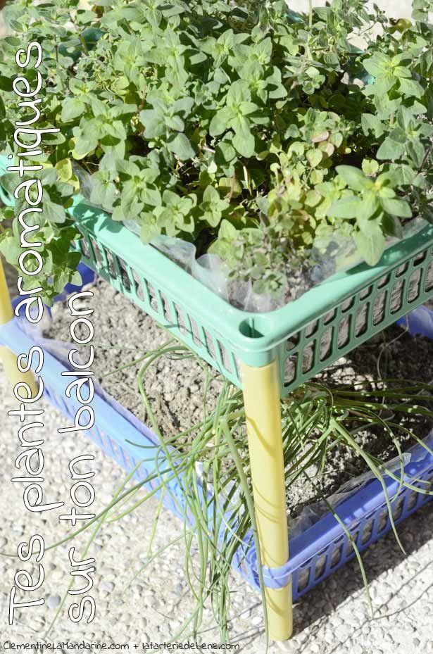 plus de 1000 id es propos de jardins plantes aromatiques sur pinterest pi ces de monnaie. Black Bedroom Furniture Sets. Home Design Ideas