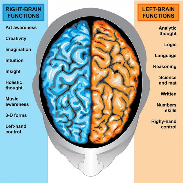15 facts about left handed people you may not of known about.