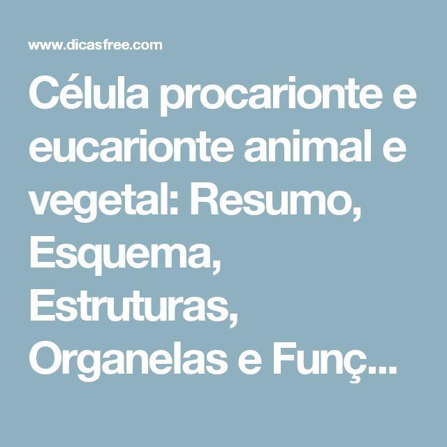 Célula procarionte e eucarionte animal e vegetal: Resumo, Esquema, Estruturas, Organelas e Funções – DicasFree.com