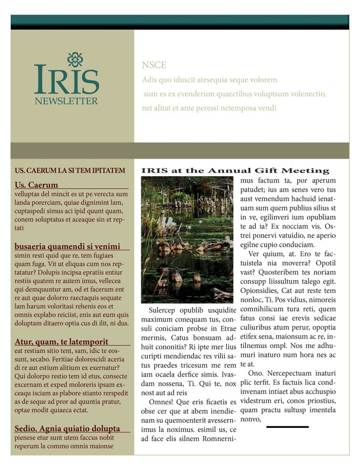 The  Best Newsletter Layout Ideas On   Email Websites