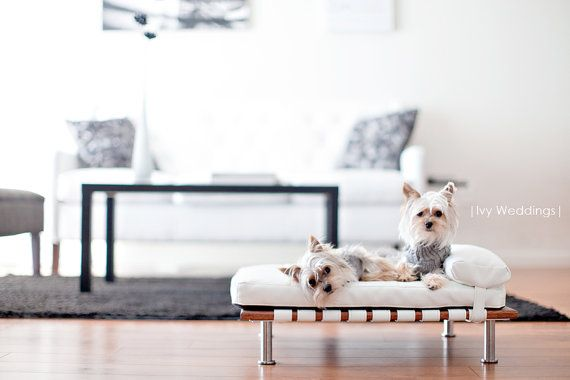 A modern chaise for the modern dog. #puppy