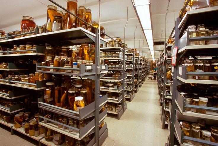12 fotos dos bastidores de um dos maiores museus do mundo