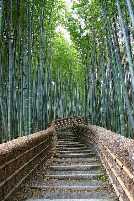 walk through Bamboo forest to graveyard at the Adashino Nenbutsu-ji temple in Ukyo-ku, Kyoto, Japan.  Photograph by Marcus Beard