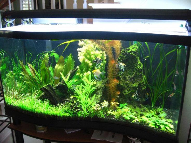 200 gallon fish tank - Google Search