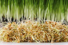 Mineral açısından bu kadar değerli buğday çimini evinizde kolayca yetiştirebilirsiniz.