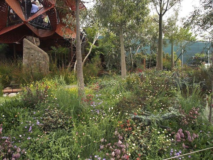 35 best images about garden ideas on pinterest gardens for Australian native garden layout