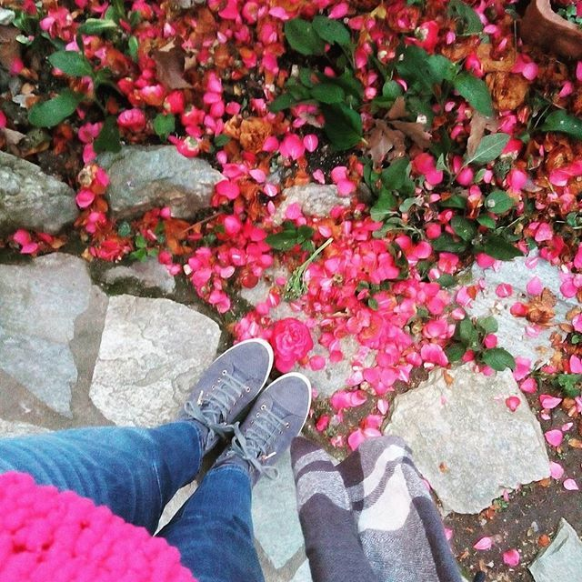 Strolling around pink camellia lanes🌸🌸 ..Beautiful nature 🌳  #nature #naturelovers #instanature #flowers #tree #instabeauty #instafashion #styleoftheday #ootd #fashionstyle #jeans #outfit #outfitpost #outfitinspiration #fashioninspo #fashioninspiration #outfitoftheday #styleoftheday #todayiwore #whatiwore #lookoftheday #stylish #beautiful #fashionpost #instamood #pink #sweater #camellia