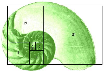 Fibonacci sequence -  How many pairs of rabbits will be produced in a year, beginning with a single pair, if in every month each pair bears a new pair which becomes productive from the second month on?  1, 1, 2, 3, 5, 8, 13, 21, 34, 55, 89, 144, 233...