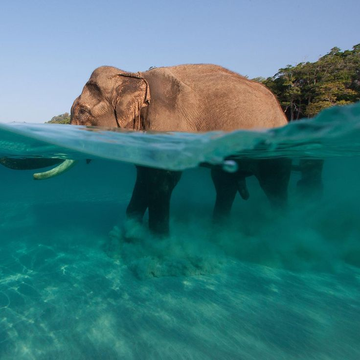 Havelock Island: Photo By @jodymacdonaldphot
