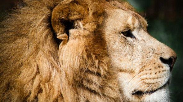 Carta d'identità dei segni zodiacali: Leone - Oasi delle Mamme