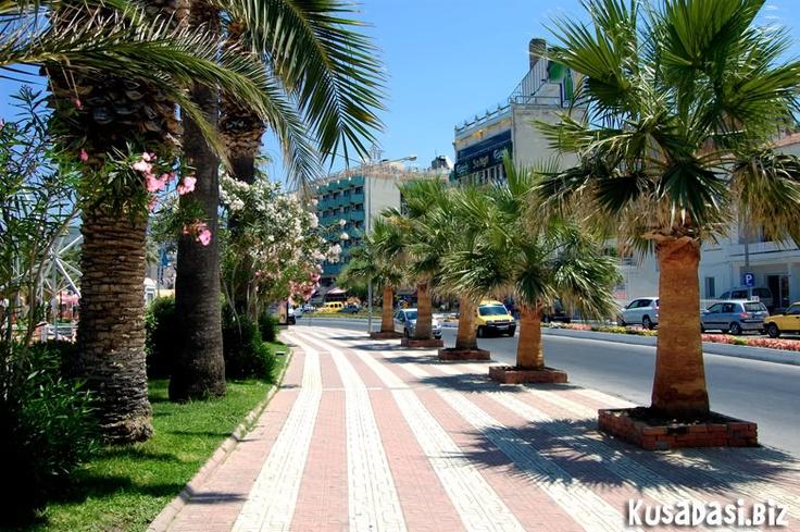 Palm tree lined road, Kusadasi.